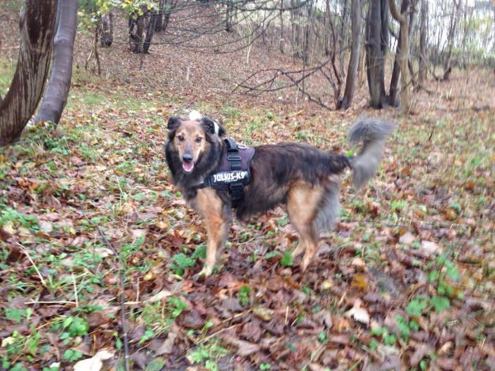 Max, geadopteerd 03-11-14