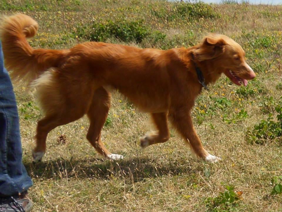 Bambie (nu Buddy), geadopteerd 30-06-13