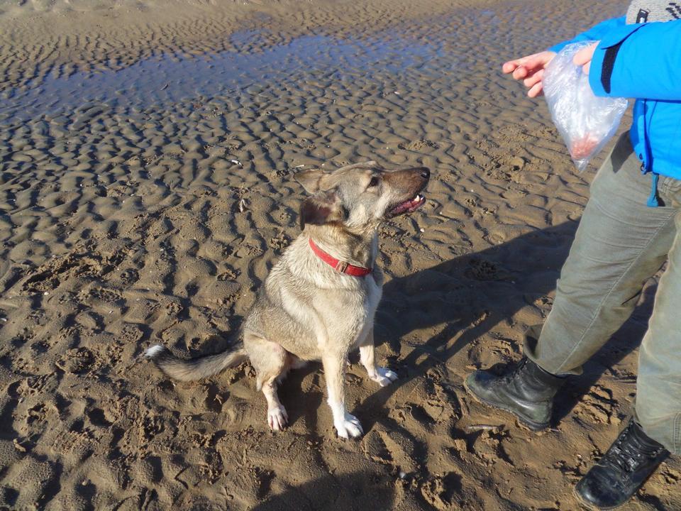 Erika (nu Lupi), geadopteerd 25-01-13 - Stichting Hond in nood