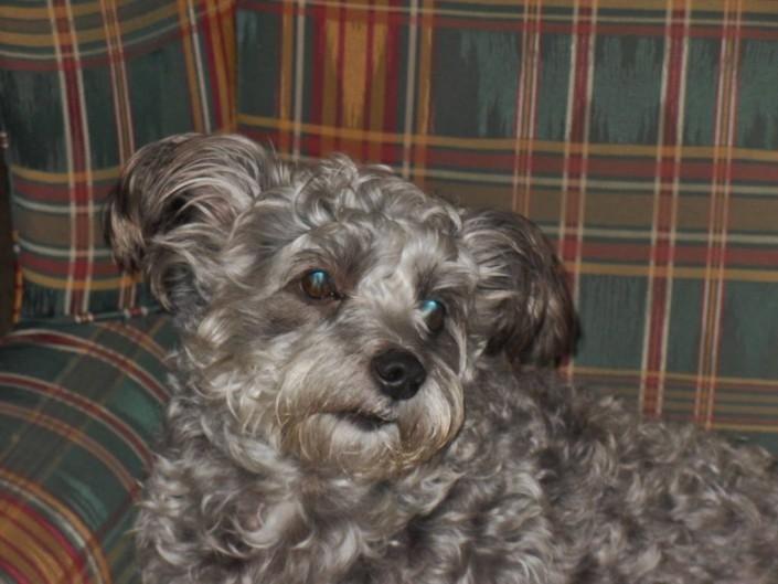 Lexy (nu Bentley) geadopteerd op 28-12-2013