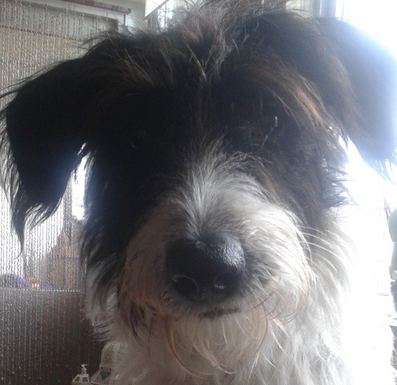 Snoopy (nu Shabby), geadopteerd op 07-12-13