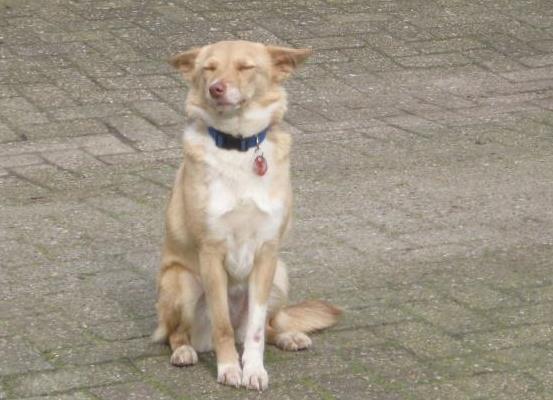 Bambie (Blondie) (nu Bijoux), geadopteerd 02-02-13