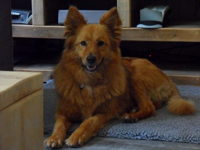 Ginger (nu Ella), geadopteerd op 09-09-15