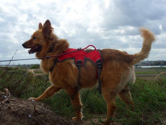 Ginger, geadopteerd op 09-09-15