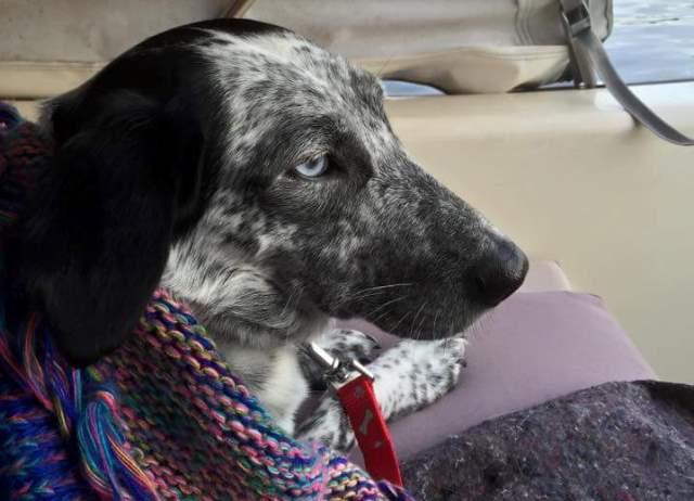 Charlotte (nu Charlie), geadopteerd 09-11-12