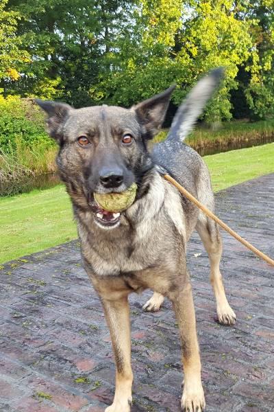 Jessie, geadopteerd 18-11-15