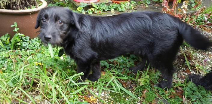 Poppy (nu Romy), geadopteerd op 26-01-16