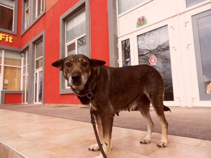 Laika, hond met hartworm