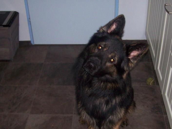 Aram, geadopteerd door service dogs op 26-01-16