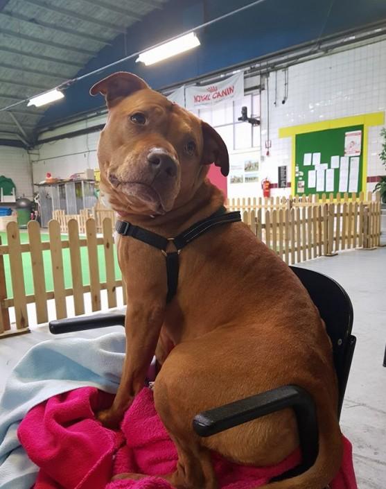 In beslag genomen hond met euthanasie advies van de Universiteit Utrecht