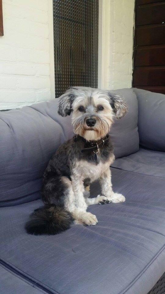 Boomer (nu Buddy), geadopteerd op 14-05-15