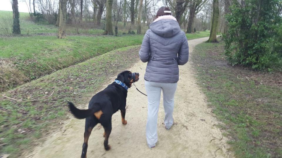 Thuistraining inbeslaggenomen Rottweiler Bink